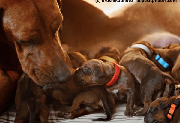 Hundemama-mit-ihren-Welpen-1024x768